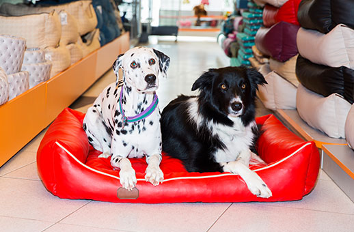 Dalmatian and Border Collie lounging on red dog bed About Us Page
