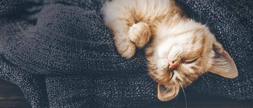 kitten sleeping on blanket