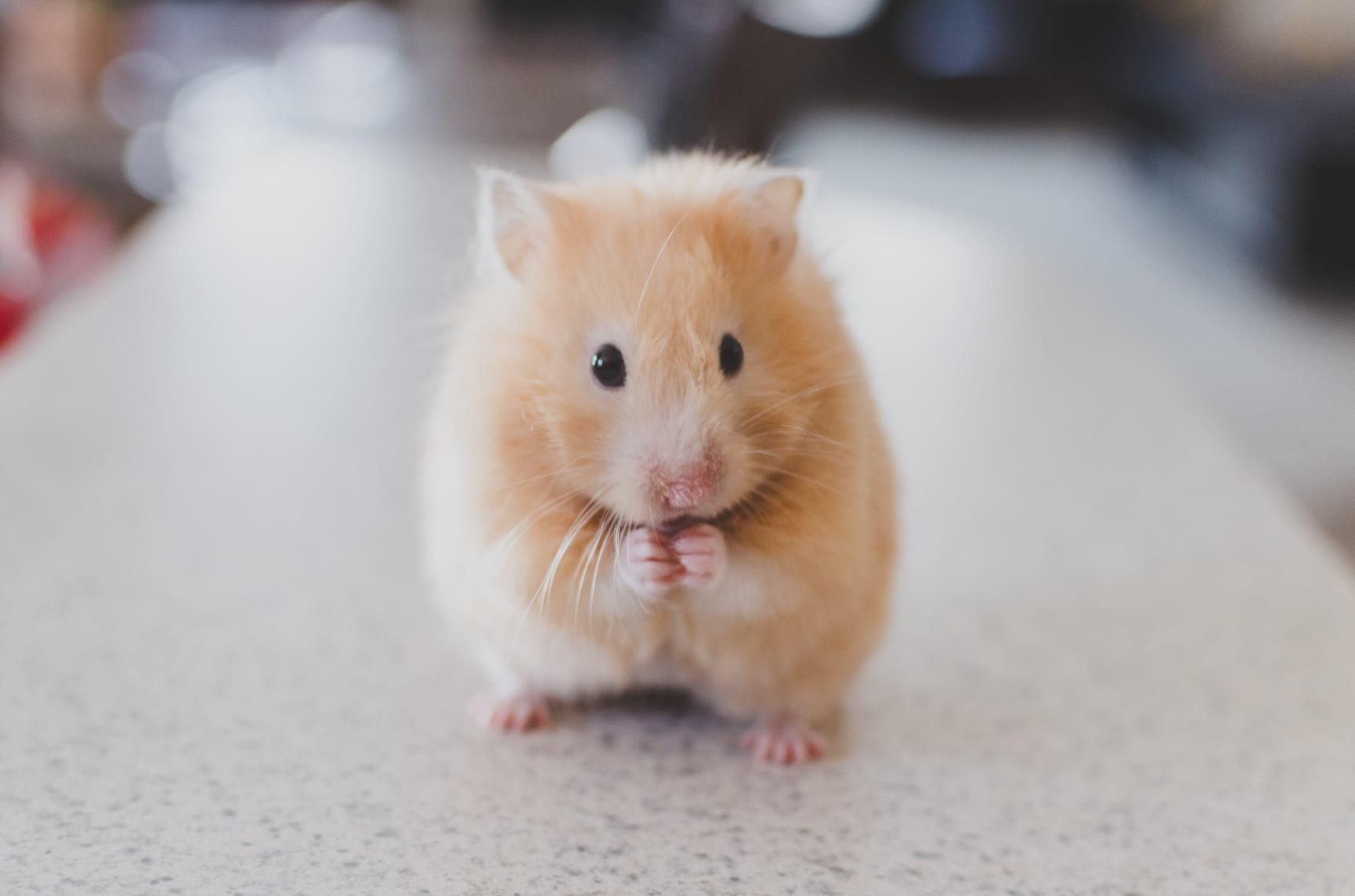 Hamster Banner