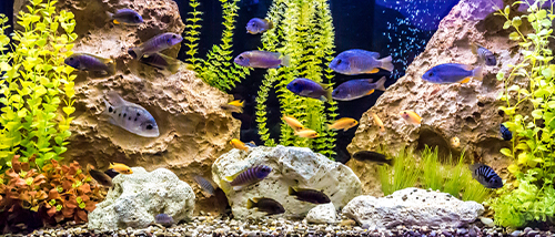 multiple blue fish swimming in a tank with green plants